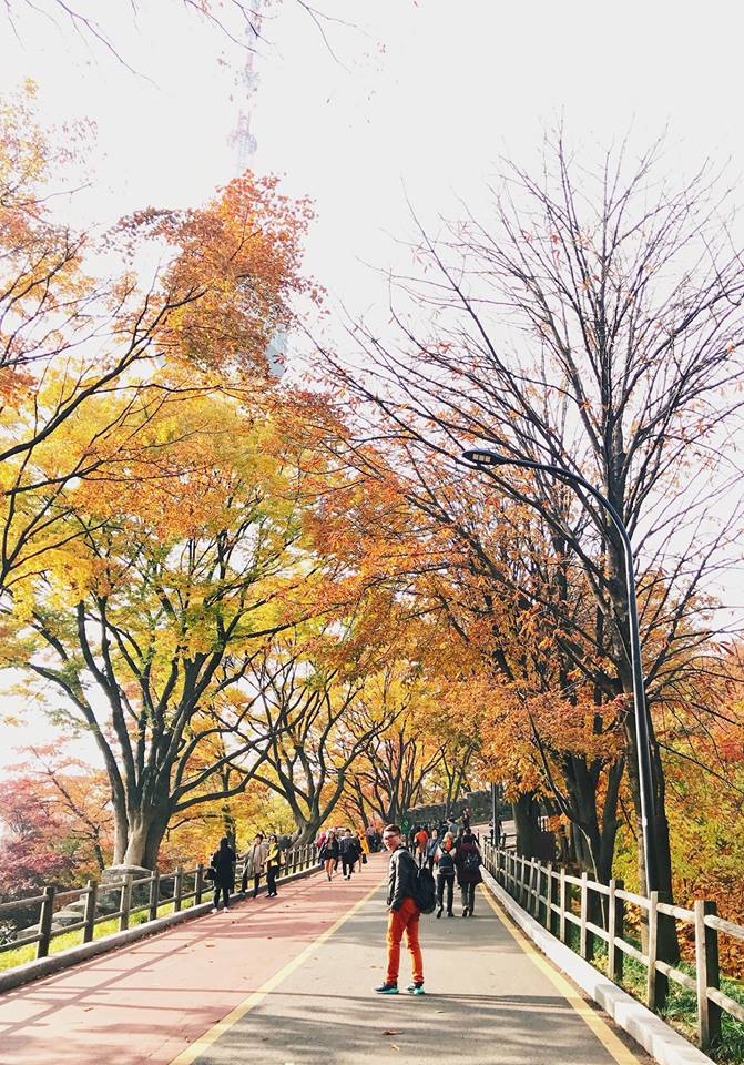 hàng cây lá vàng gần tháp namsan