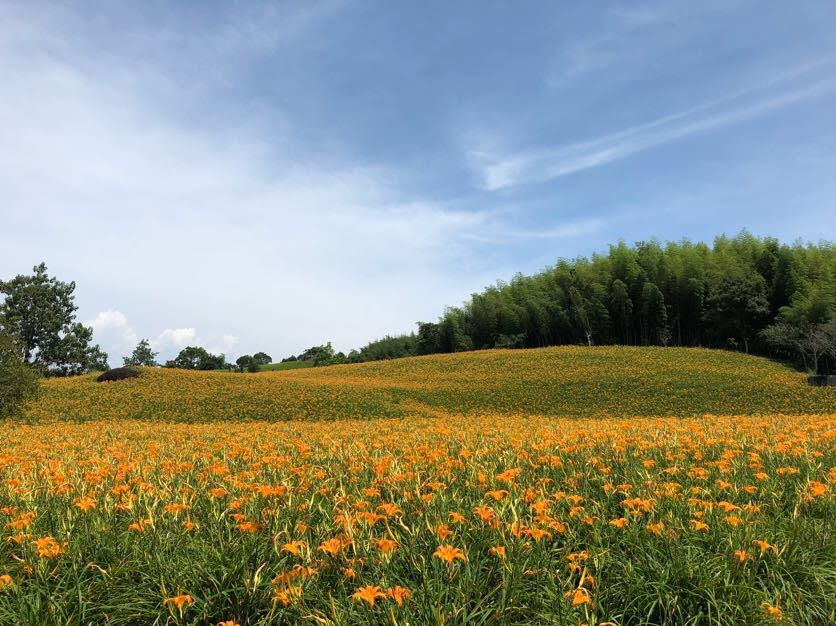 cánh đồng huyên thảo tại chi ke san