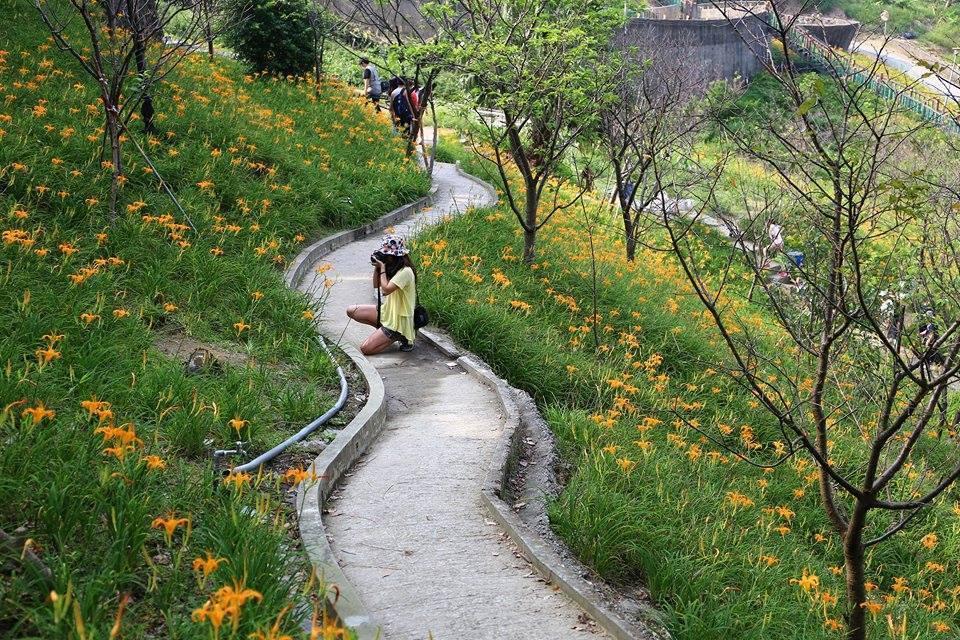chụp ảnh hoa huyên thảo tại cinyin leisure farm