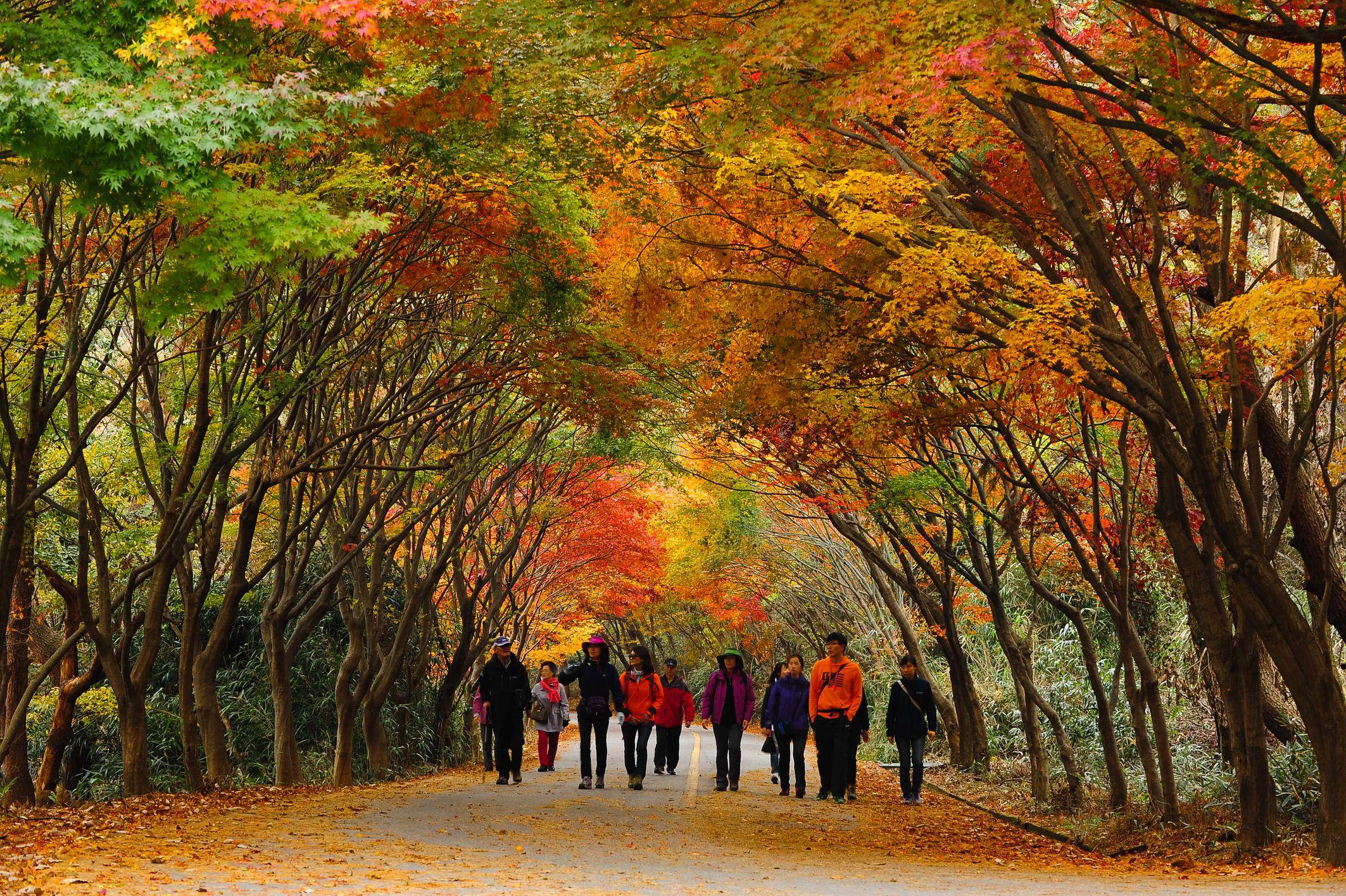 mùa thu tại mudeungsan
