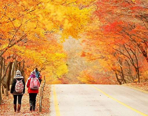 mùa thu tại naejansan