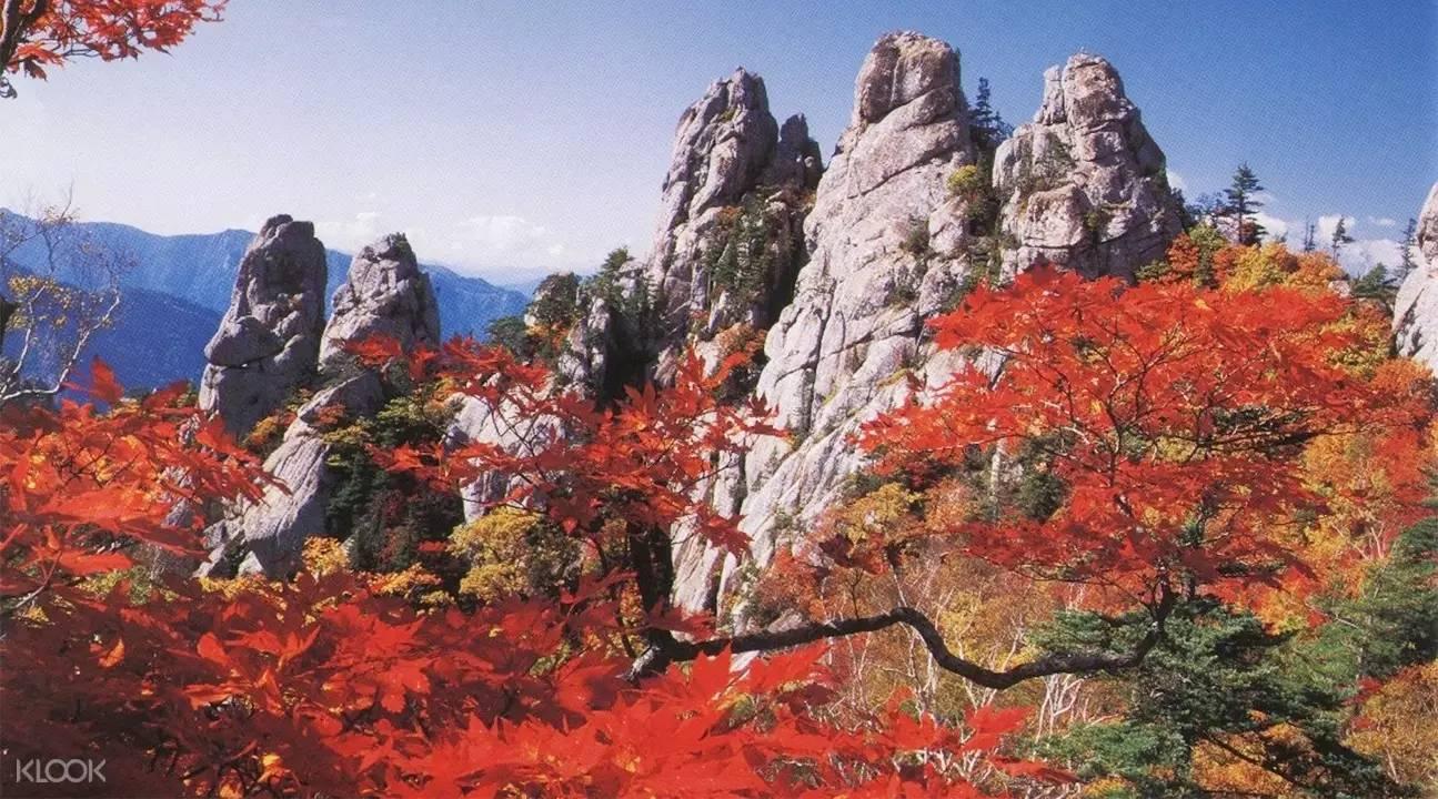 lá đỏ mùa thu tại núi Seoraksan