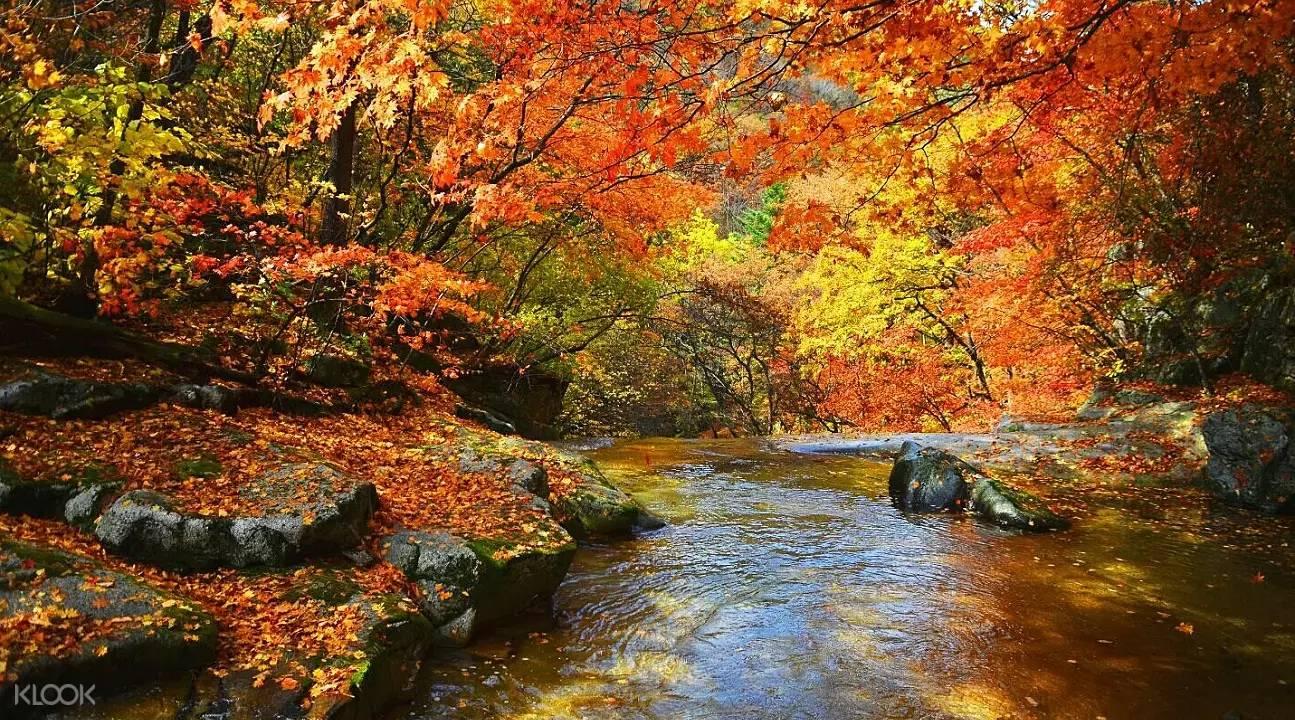 rừng lá đỏ tại dãy núi Naejangsan