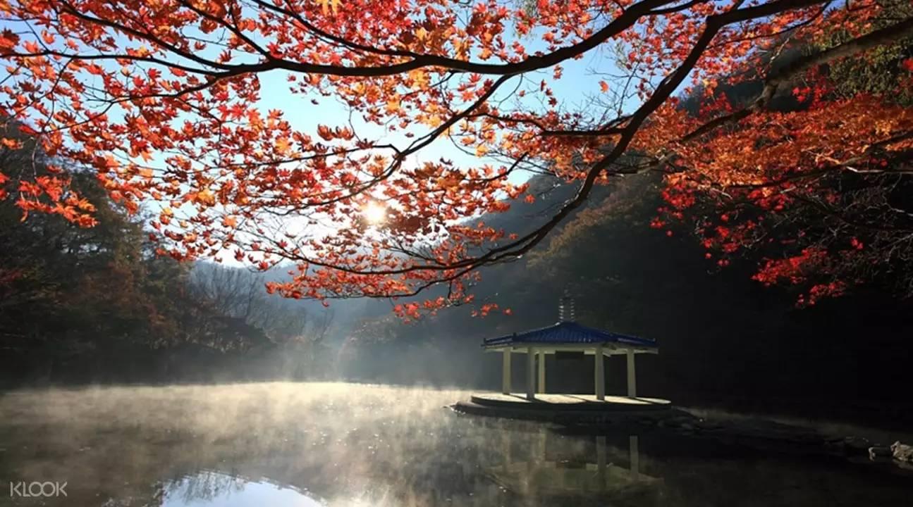 cây lá đỏ trên mặt hồ tại dãy núi Naejangsan