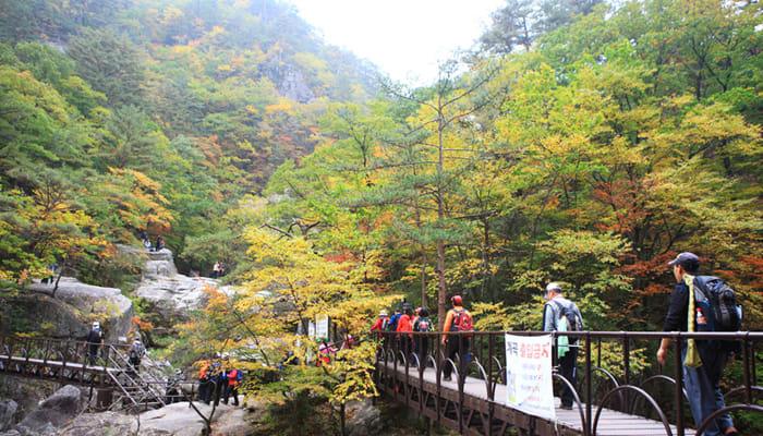rừng lá thu tại núi Odaesan