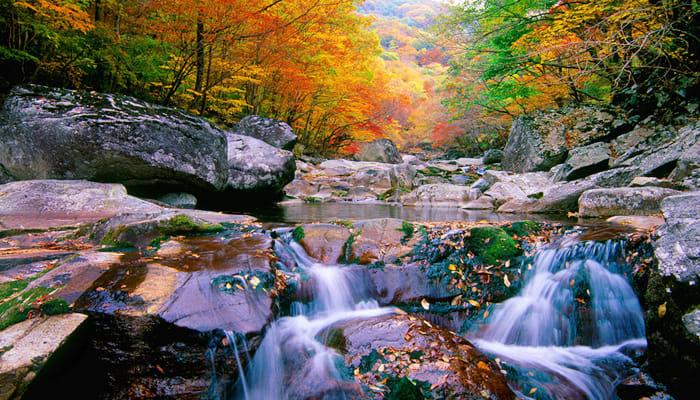 suối và rừng lá đỏ tại núi Jirisan