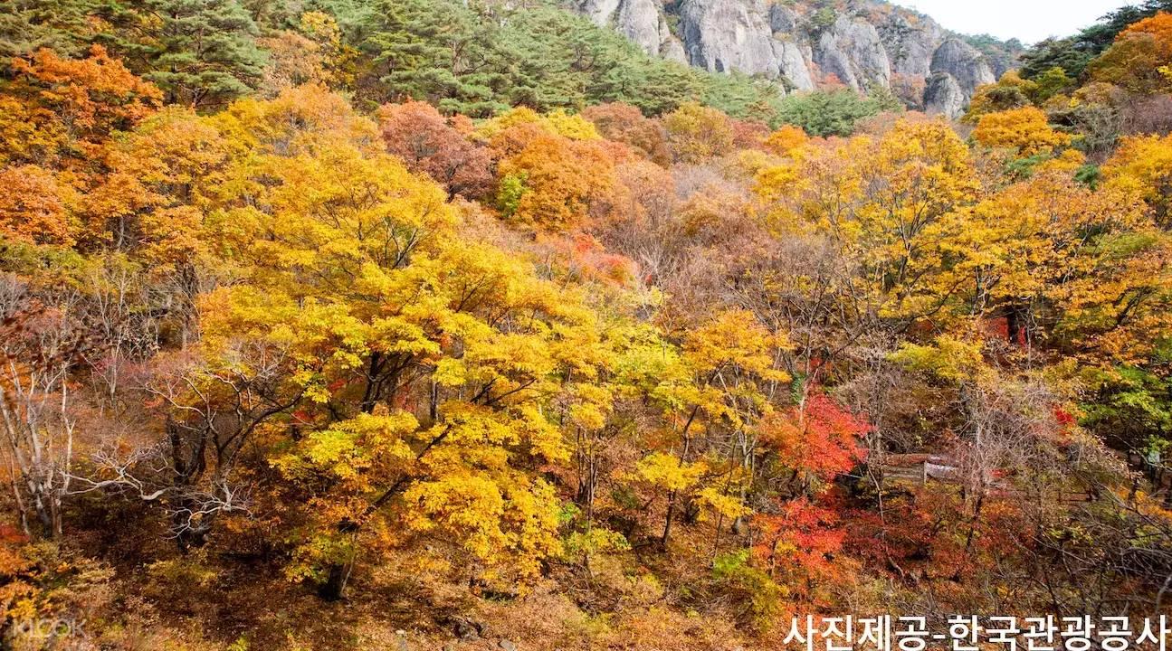 rừng lá đỏ tại núi Juwangsan