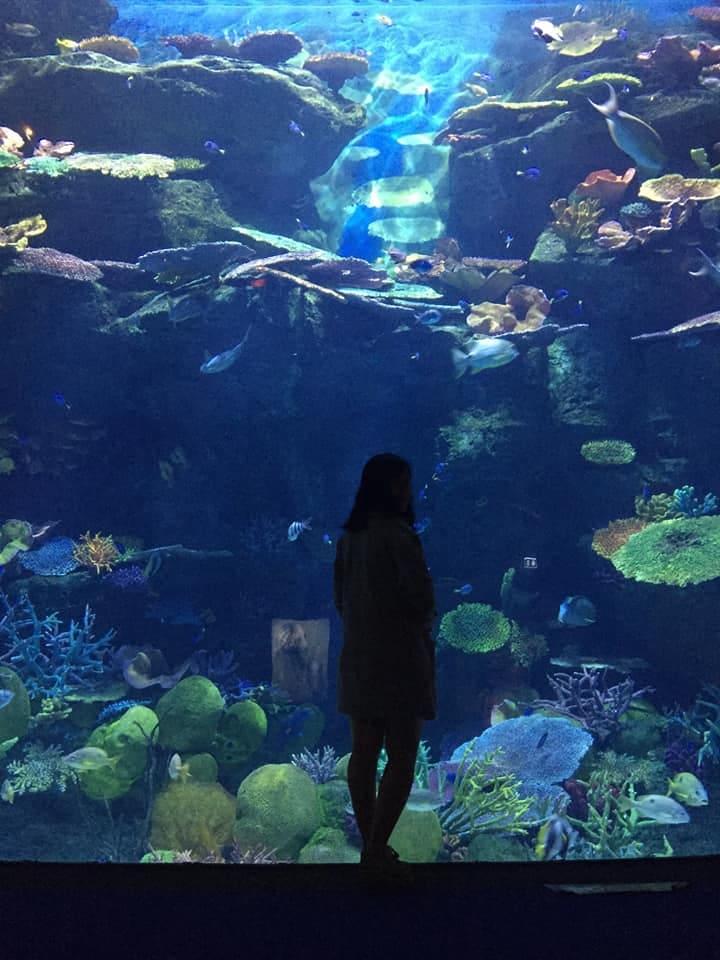thủy cung sea life ocean world