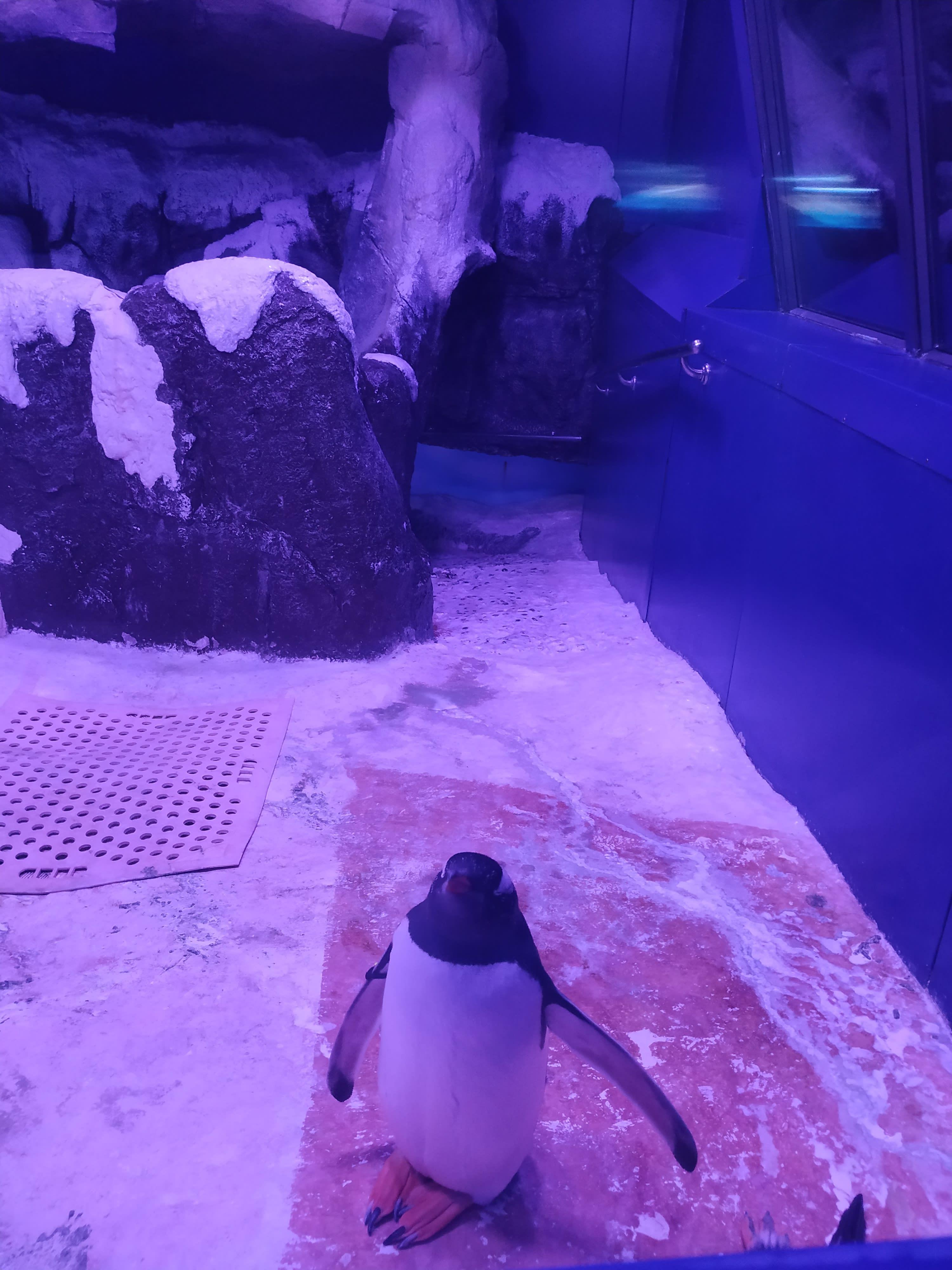 chim cánh cụt trong sea life bangkok