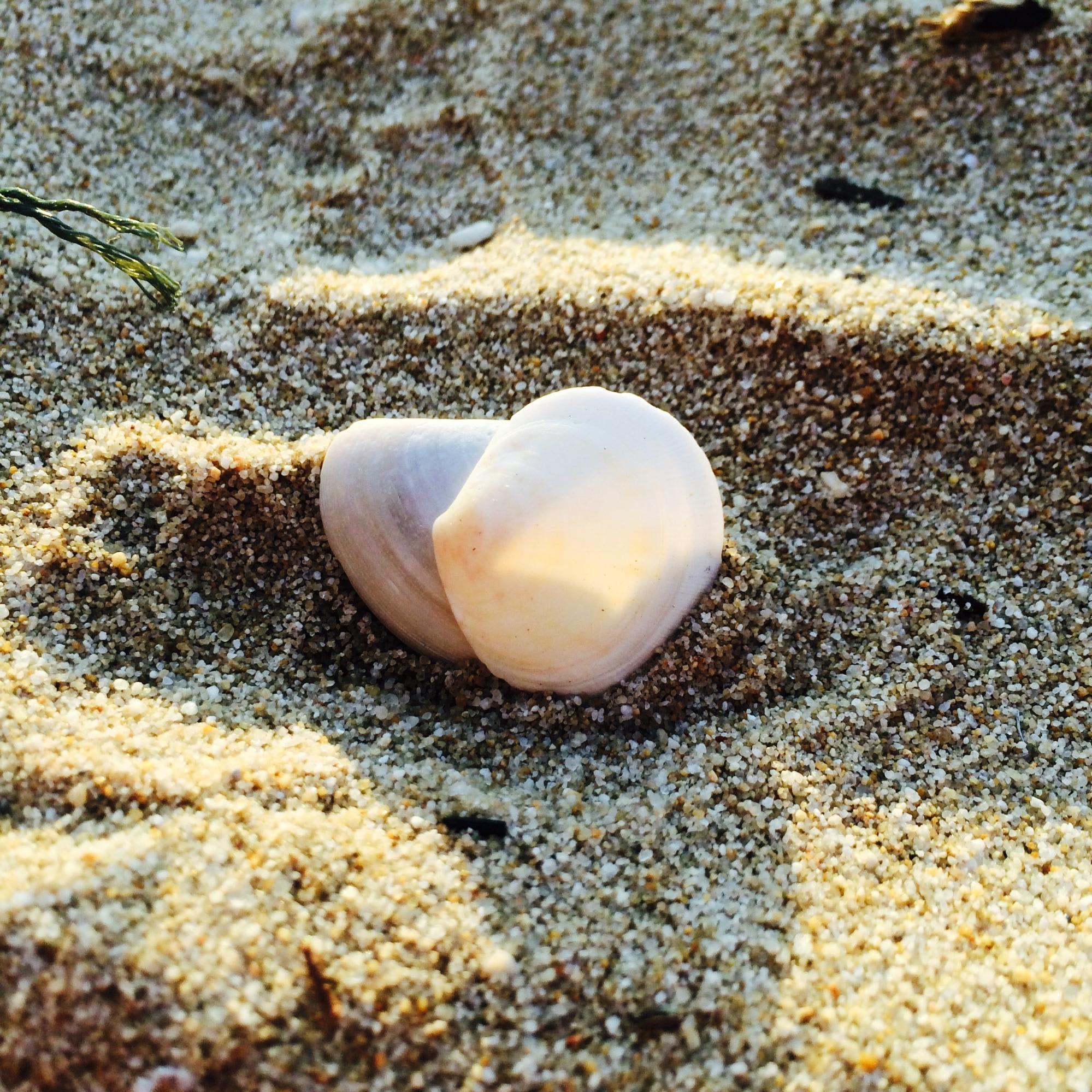 vỏ sò trên bãi cát