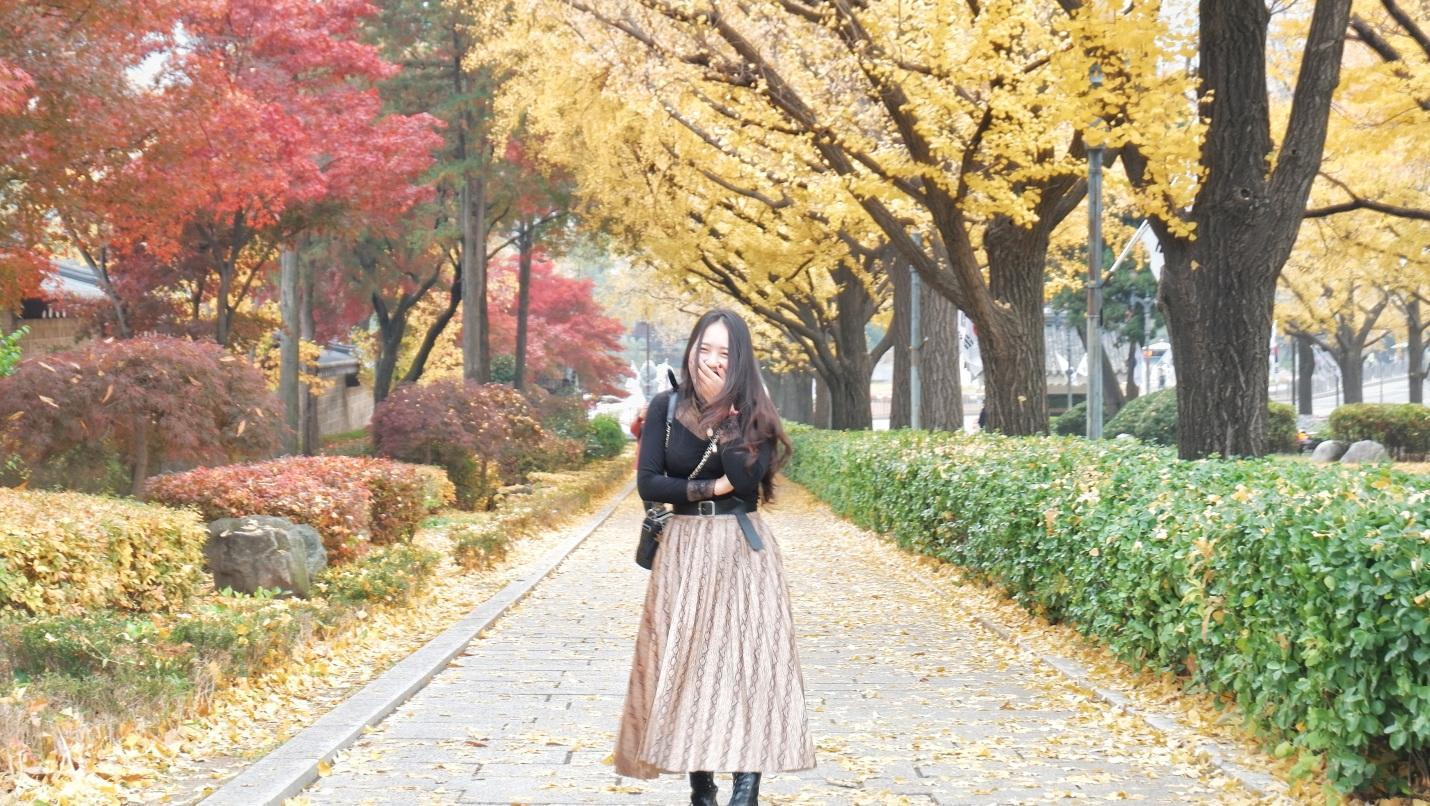 hàng cây lá vàng trong gyeongbokgung
