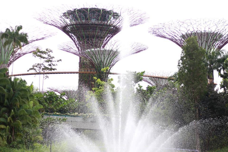 khu vườn và thác nước tại cloud forest