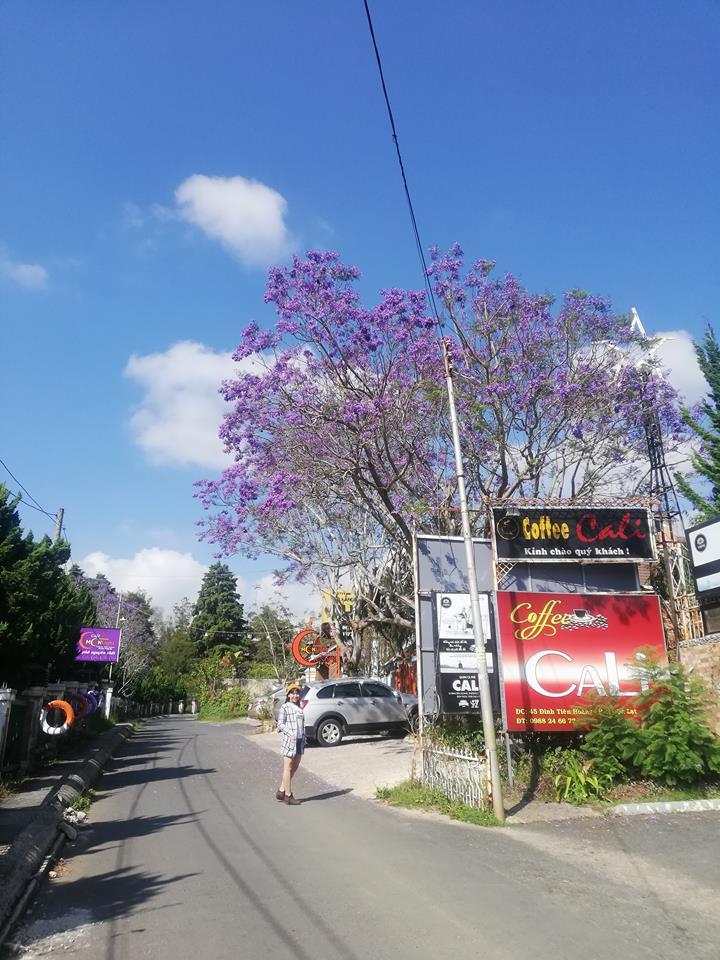 hoa phượng tím tại một góc đường