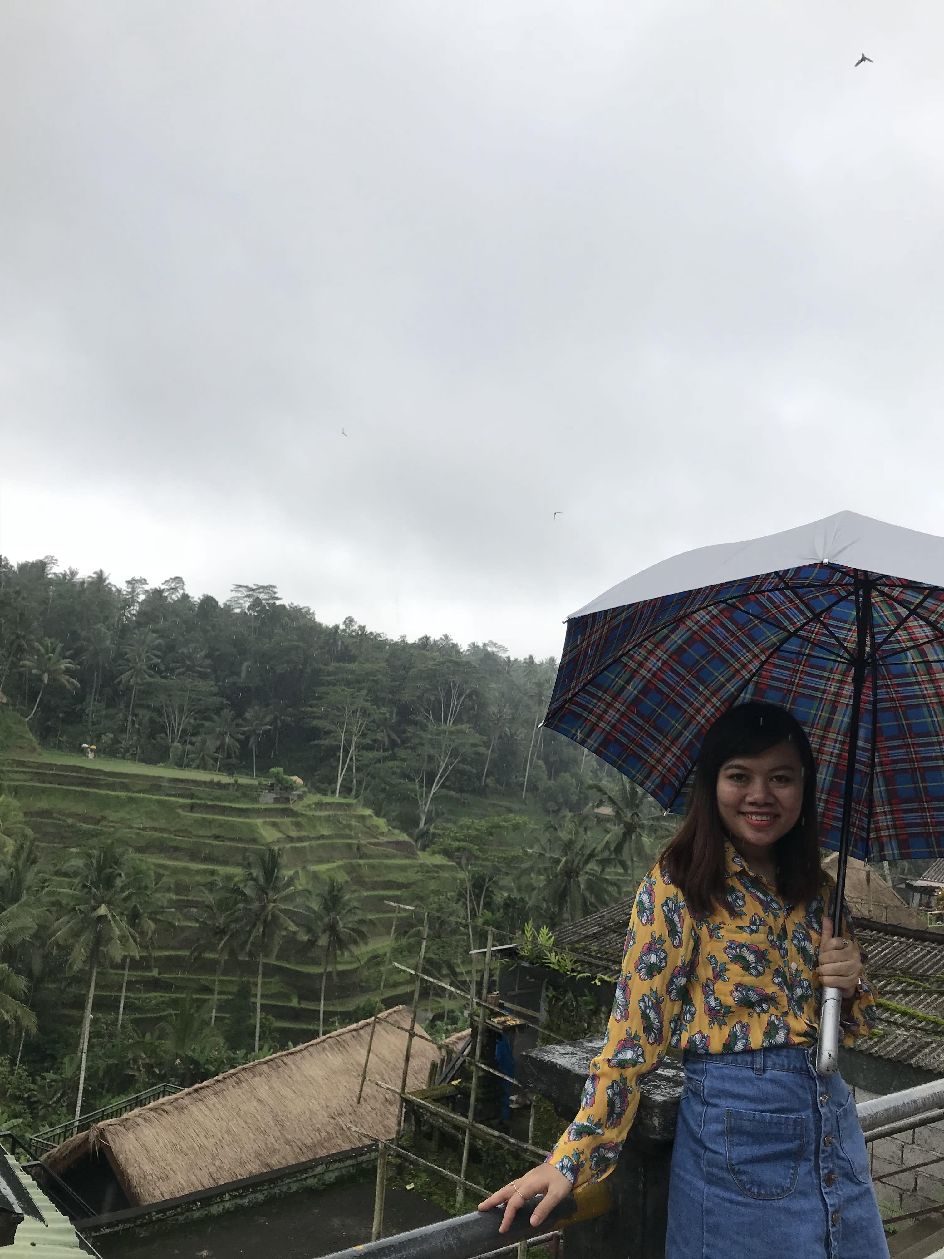 rice terrace ở bali