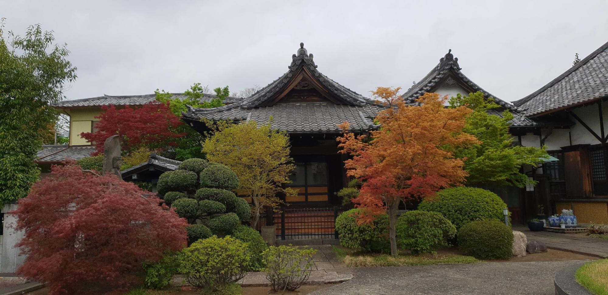 nhà cổ và lá thu tại yanaka