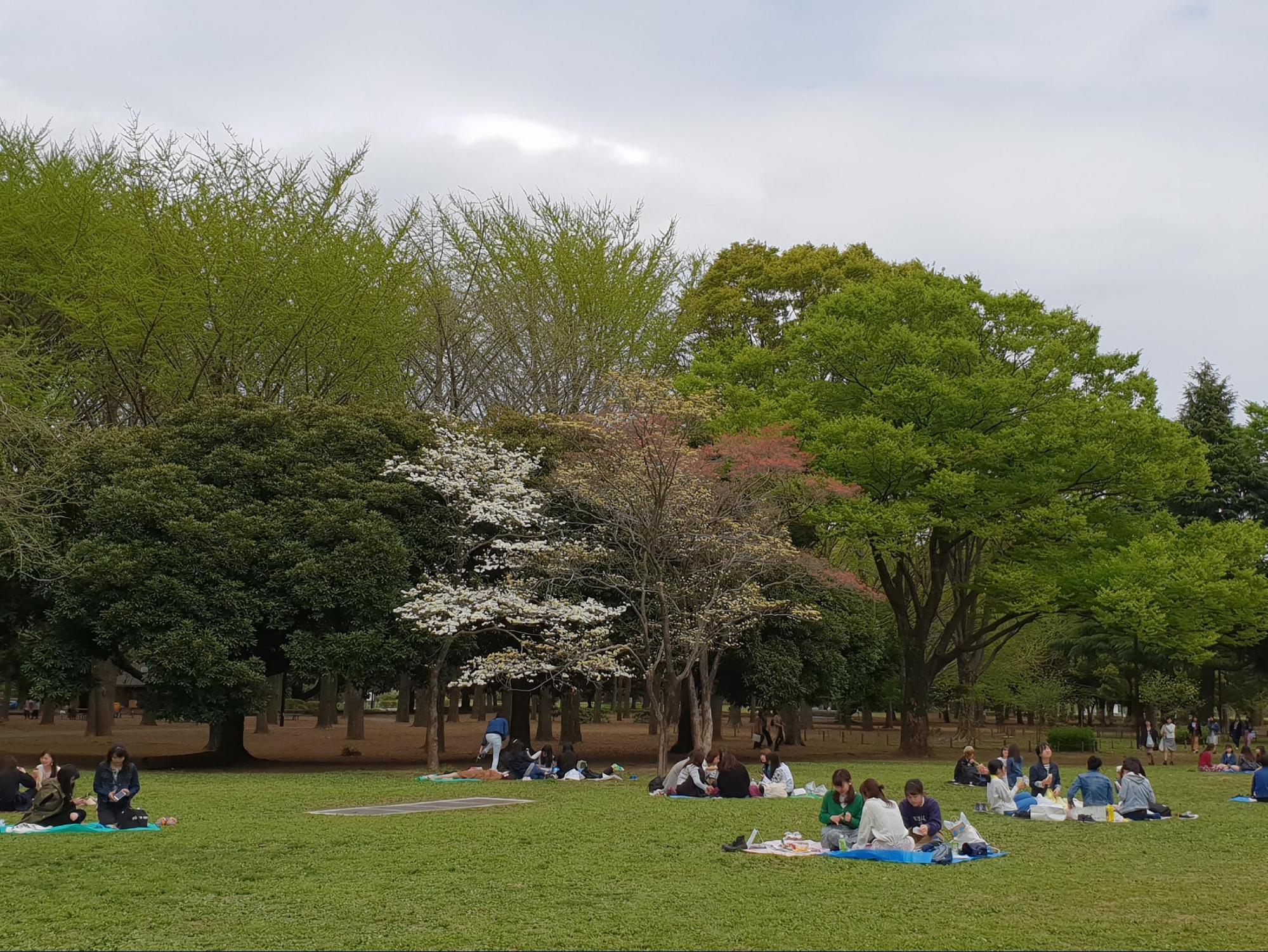 picnic tại công viên yoyogi