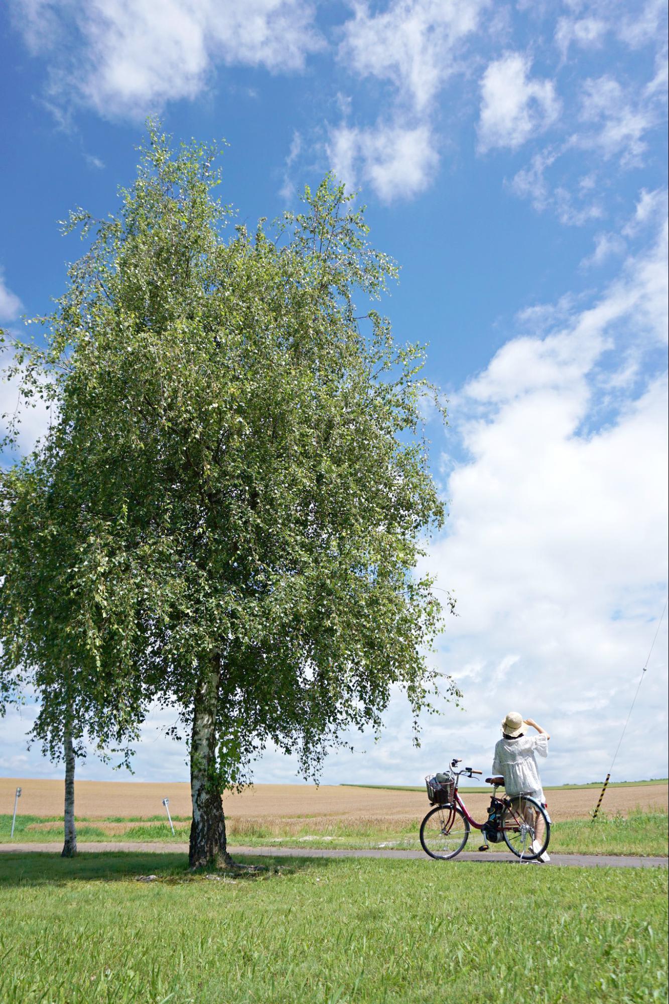 cây tại vùng nông nghiệp hokkaido