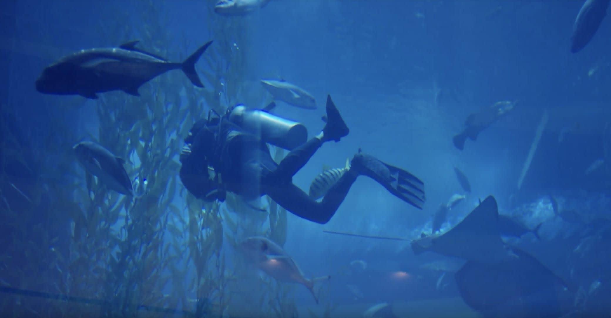 lặn ở thủy cung dubai