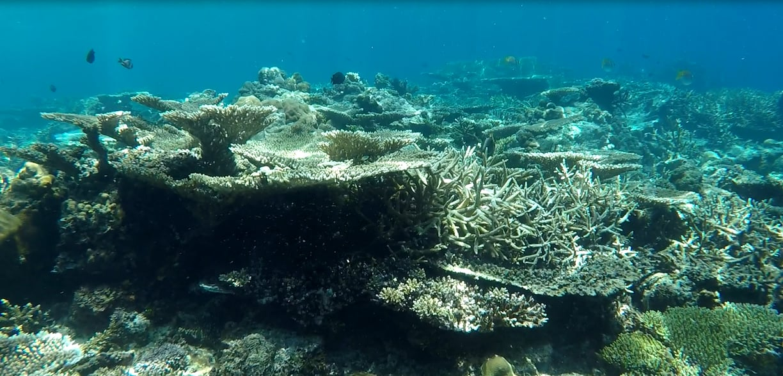 rạn san hô ở el nido