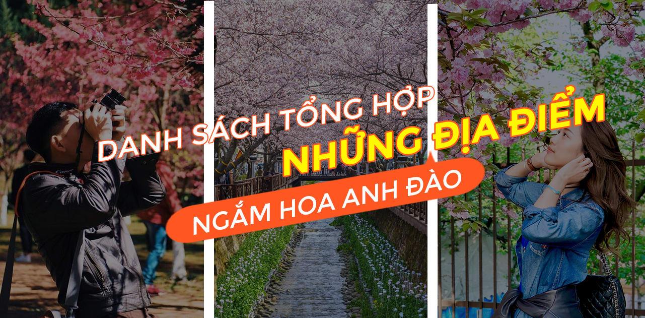 18 địa điểm ngắm hoa anh đào bạn không thể bỏ lỡ mùa xuân này 1