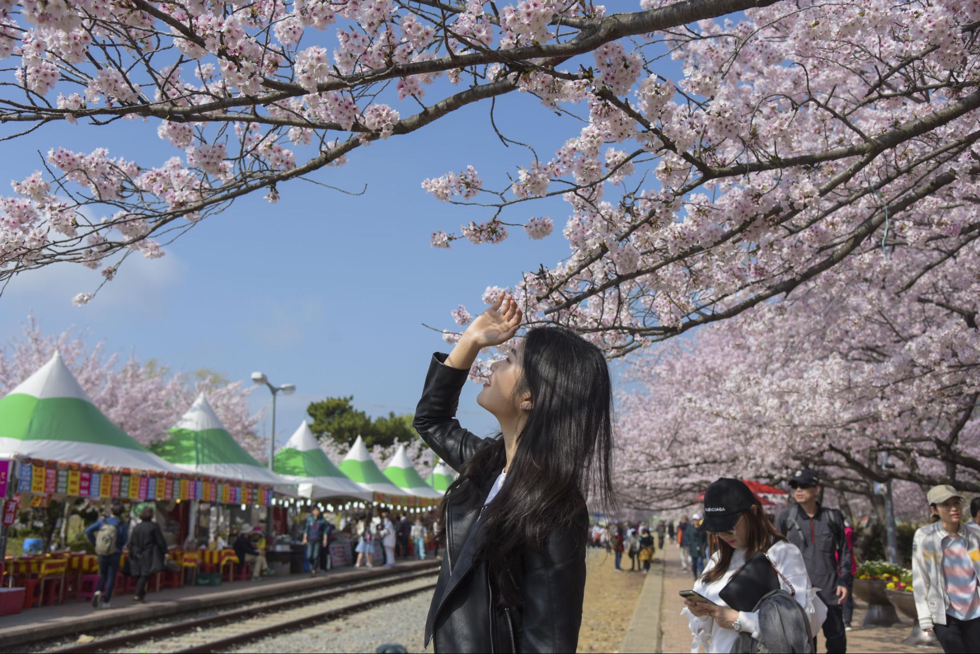 18 địa điểm ngắm hoa anh đào bạn không thể bỏ lỡ mùa xuân này 23