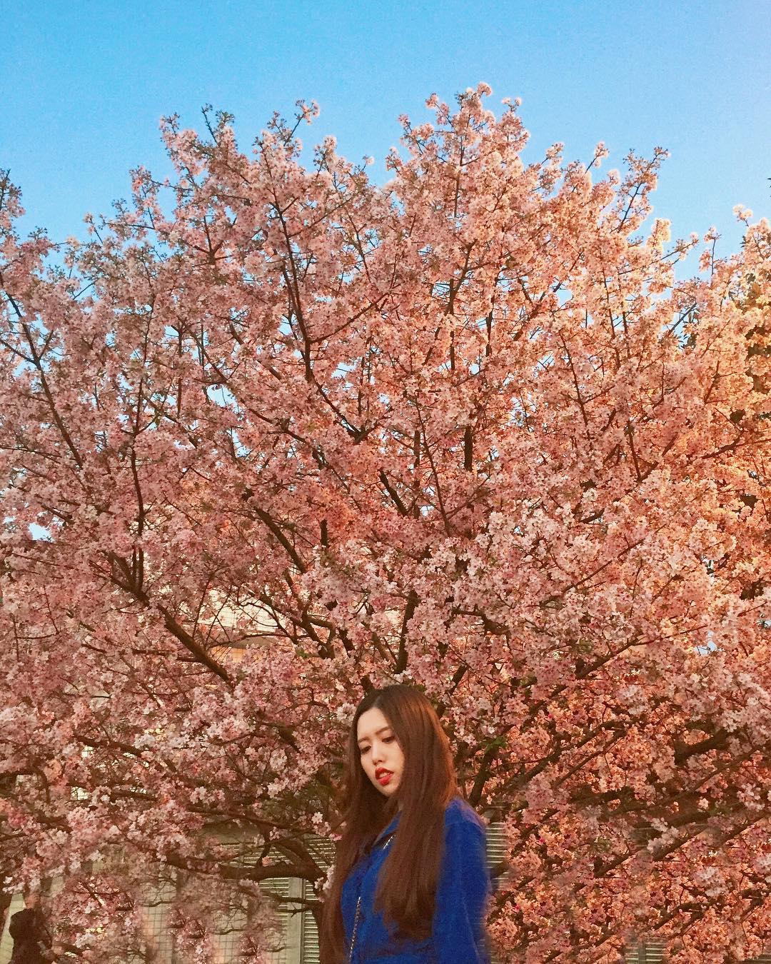 18 địa điểm ngắm hoa anh đào bạn không thể bỏ lỡ mùa xuân này 28