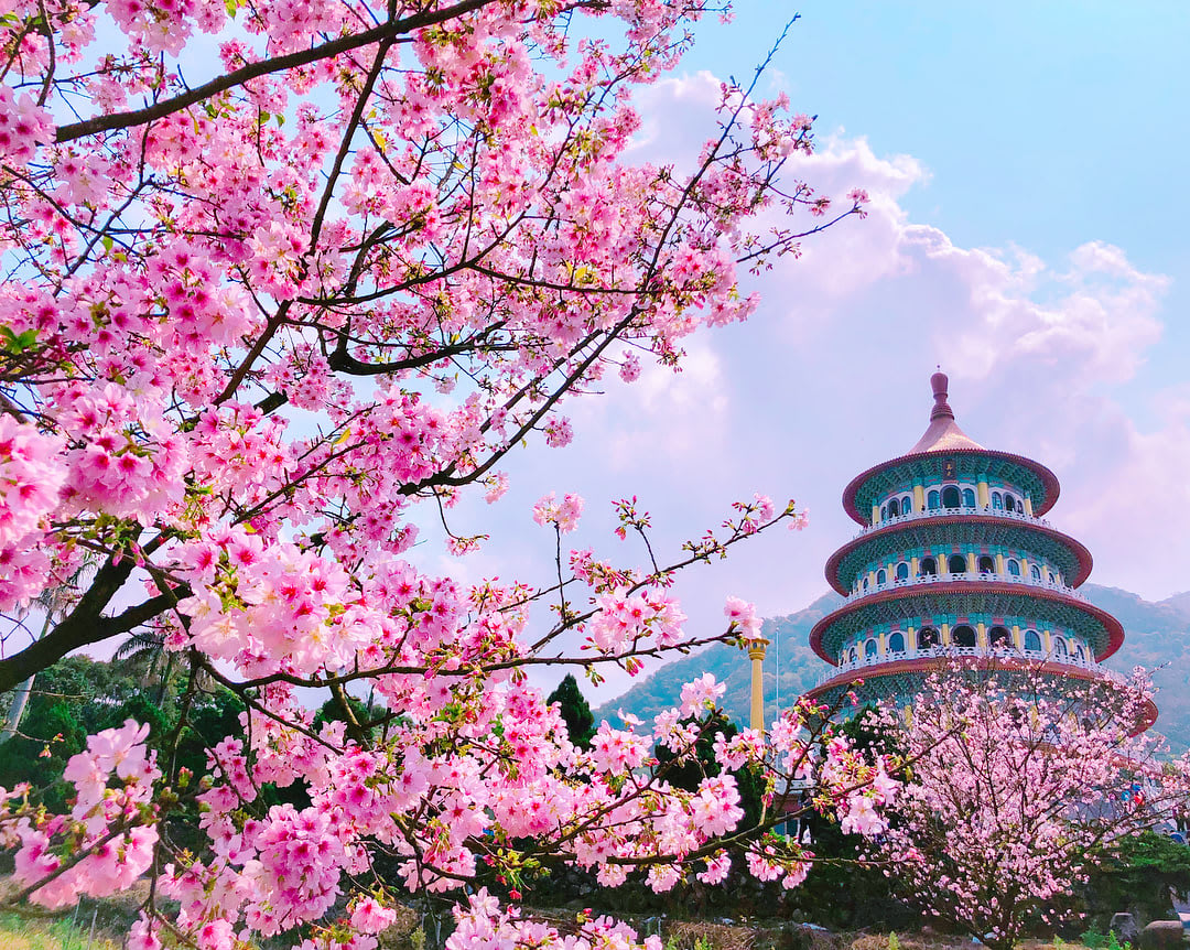 18 địa điểm ngắm hoa anh đào bạn không thể bỏ lỡ mùa xuân này 29