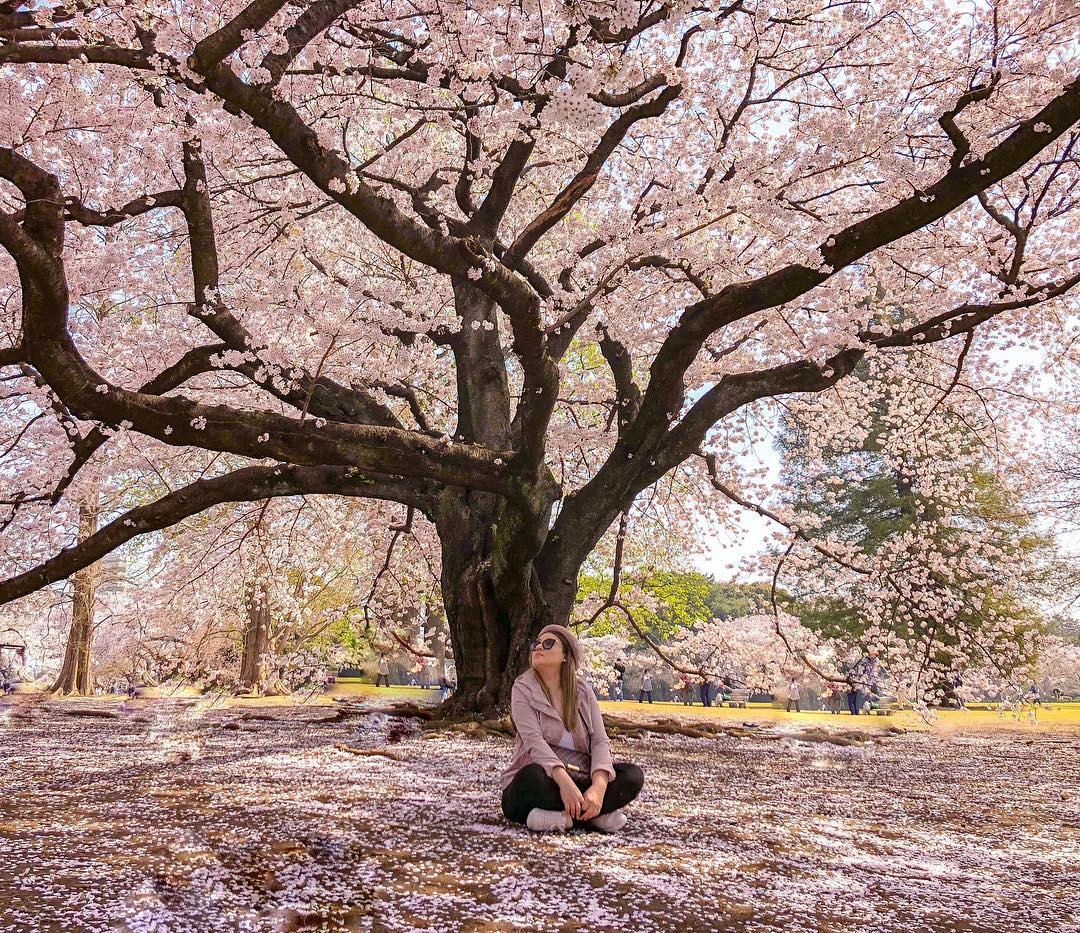 18 địa điểm ngắm hoa anh đào bạn không thể bỏ lỡ mùa xuân này 11