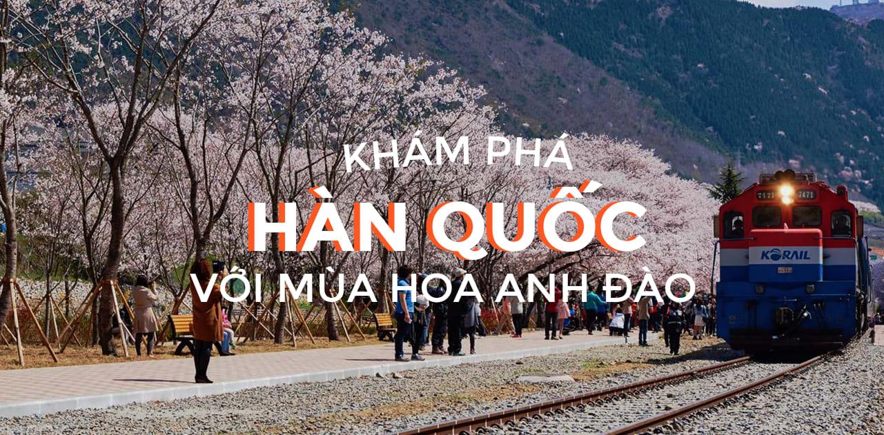 Giấc mơ anh đào: 11 điểm ngắm hoa đẹp nhất Hàn Quốc không thể bỏ lỡ 1