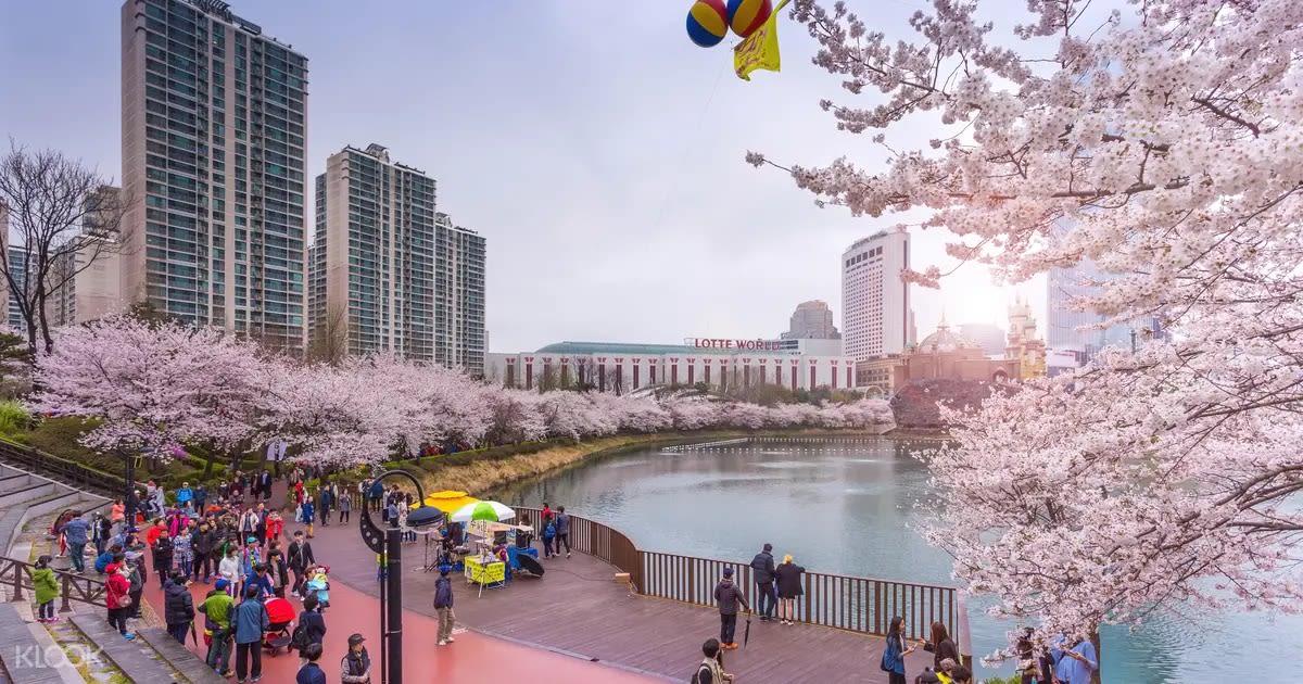 Giấc mơ anh đào: 11 điểm ngắm hoa đẹp nhất Hàn Quốc không thể bỏ lỡ 6