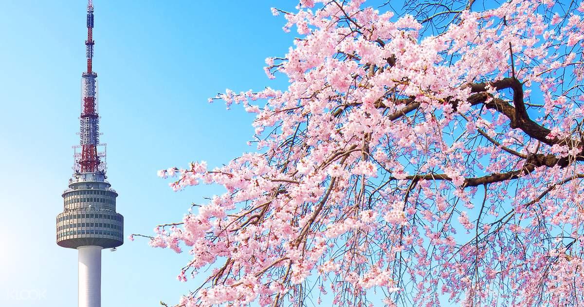 Giấc mơ anh đào: 11 điểm ngắm hoa đẹp nhất Hàn Quốc không thể bỏ lỡ 4