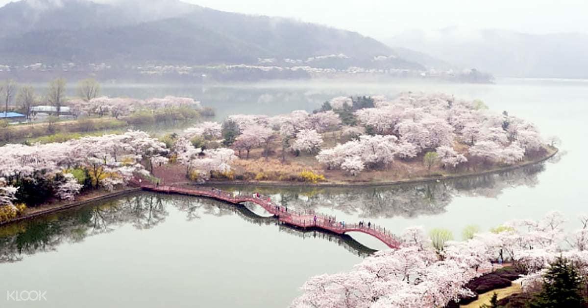 Giấc mơ anh đào: 11 điểm ngắm hoa đẹp nhất Hàn Quốc không thể bỏ lỡ 13