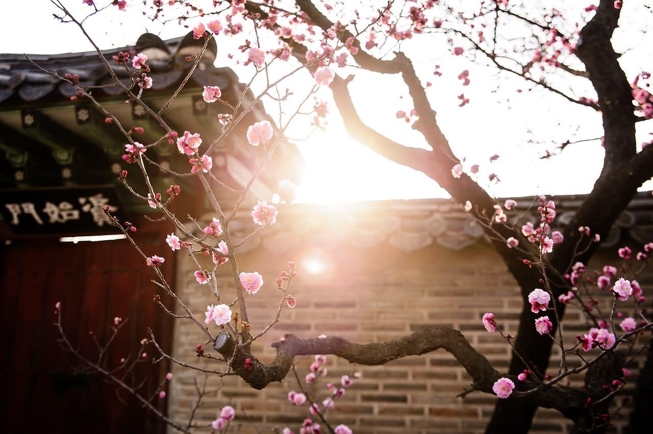 Giấc mơ anh đào: 11 điểm ngắm hoa đẹp nhất Hàn Quốc không thể bỏ lỡ 5
