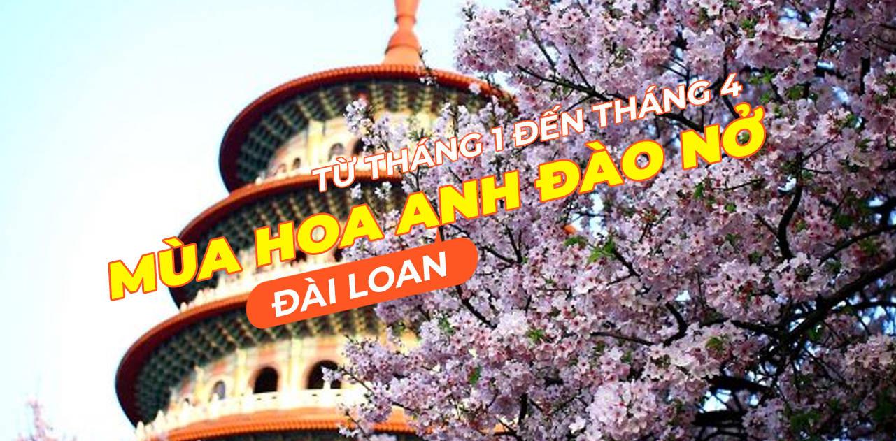 Giấc mơ anh đào: Ngập tràn sắc hồng tại Đài Loan từ tháng 1 đến tháng 4! 1