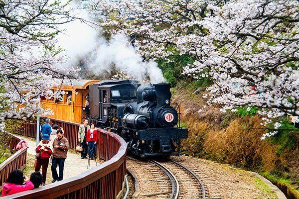 Giấc mơ anh đào: Ngập tràn sắc hồng tại Đài Loan từ tháng 1 đến tháng 4! 4