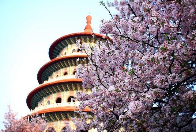 Giấc mơ anh đào: Ngập tràn sắc hồng tại Đài Loan từ tháng 1 đến tháng 4! 6