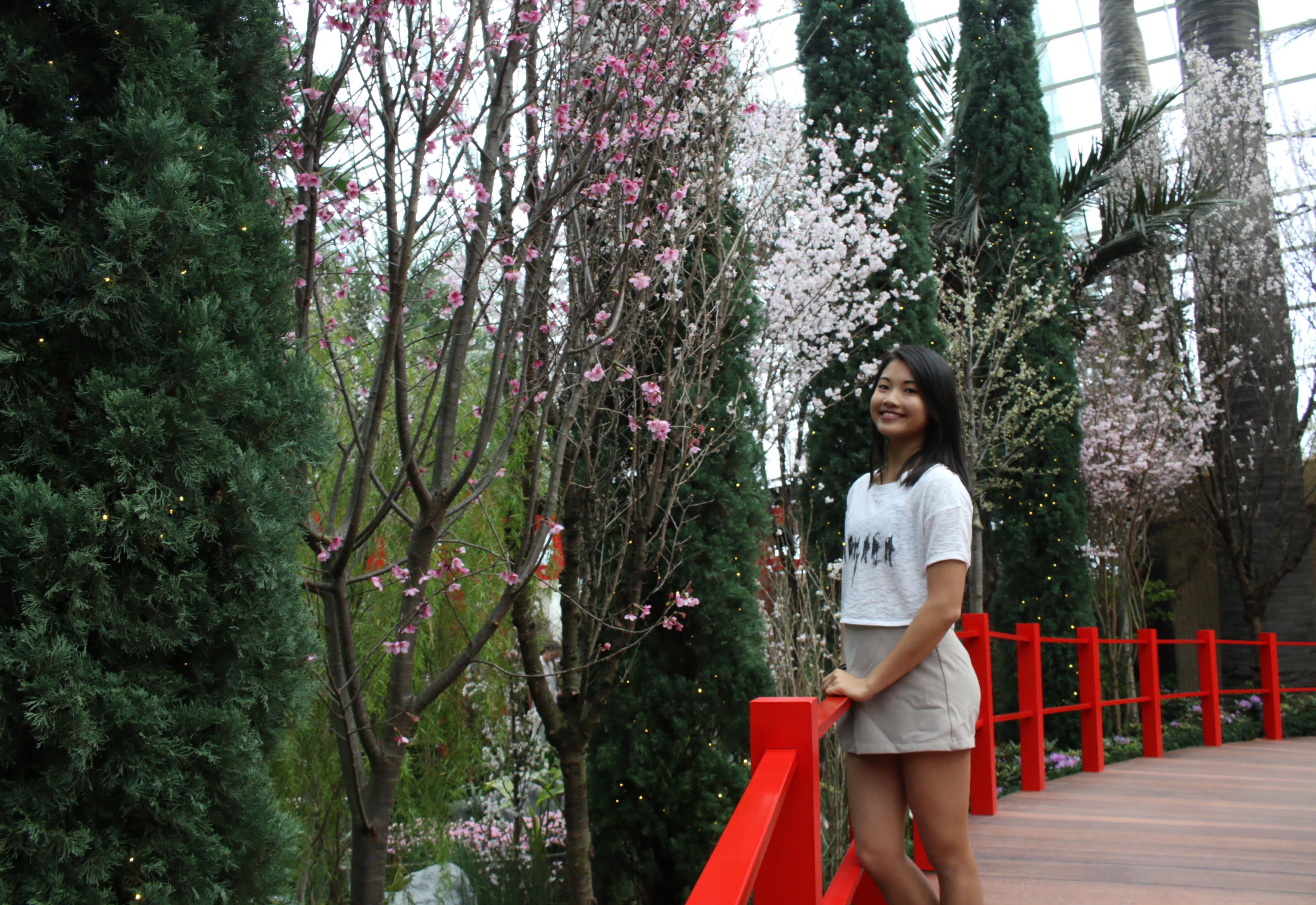 dung lo neu ban lo mat mua hoa anh dao o nhat singapore cung co hoa anh dao cho ban16