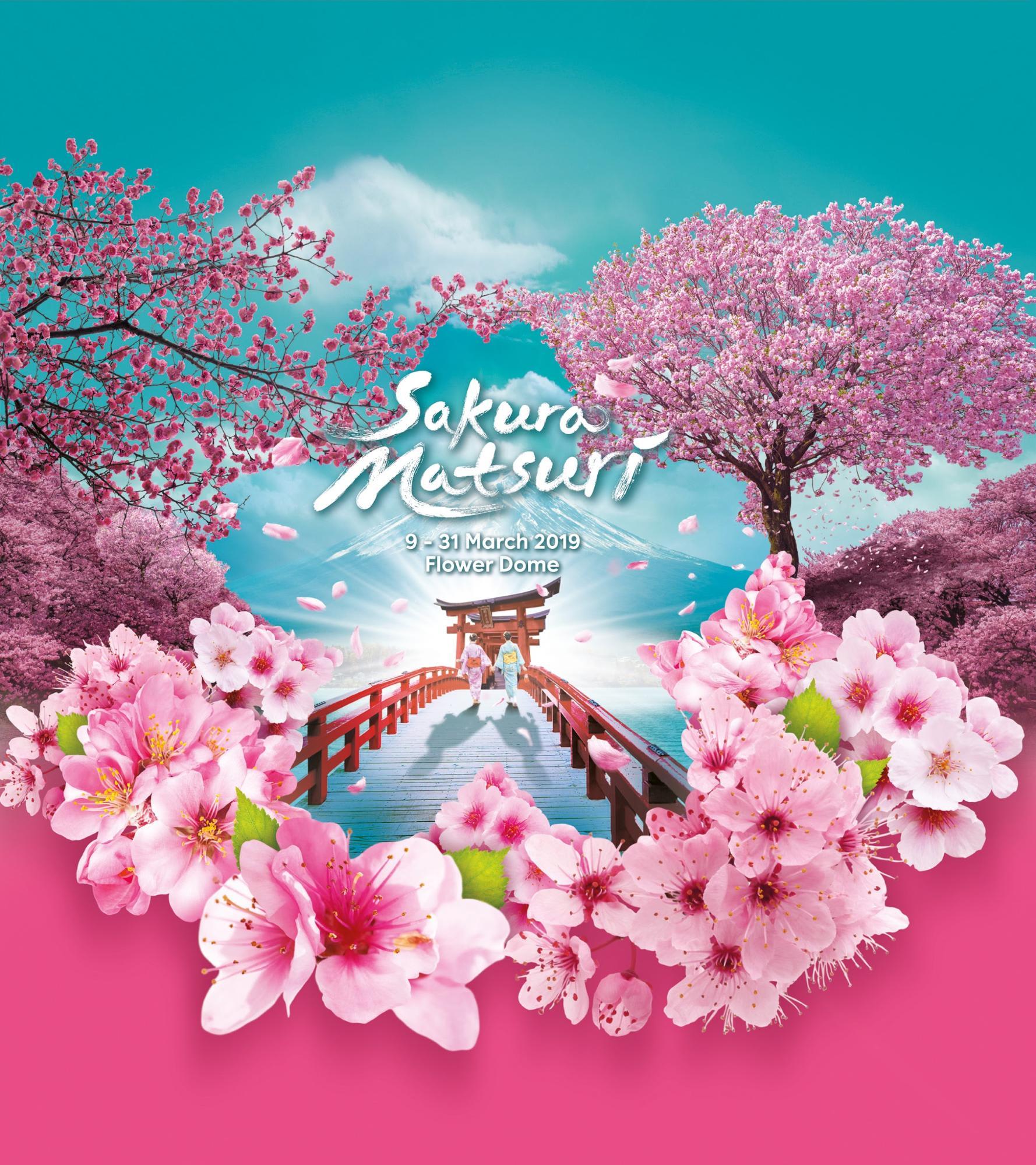 dung lo neu ban lo mat mua hoa anh dao o nhat singapore cung co hoa anh dao cho ban3