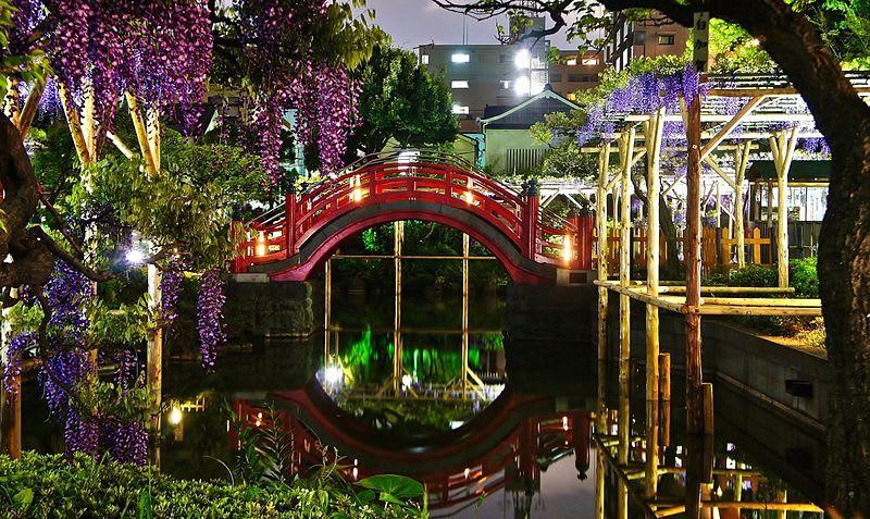 """Bắt trọn mùa hoa Tử Đằng đẹp """"rụng tim"""" ở Nhật Bản trong tháng 04 & 05 8"""