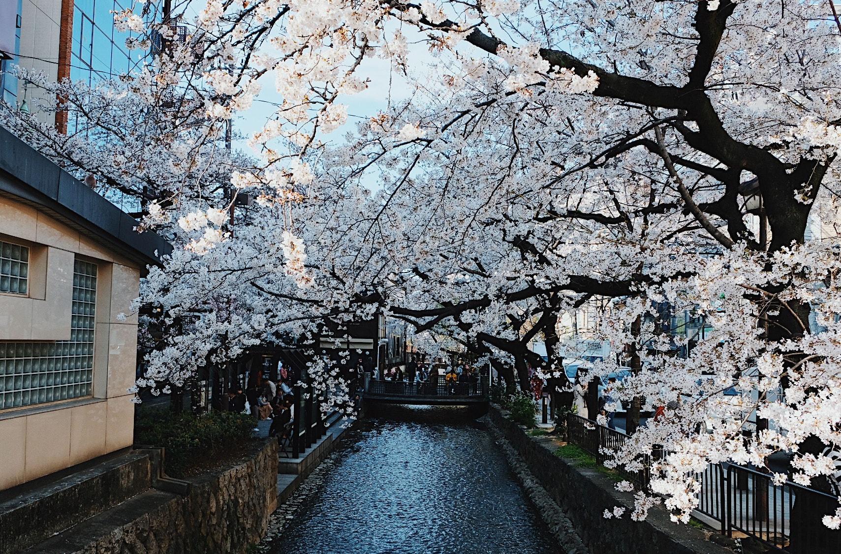 Lịch trình khám phá hết Kyoto, Osaka và Nara chỉ với 13tr! 4
