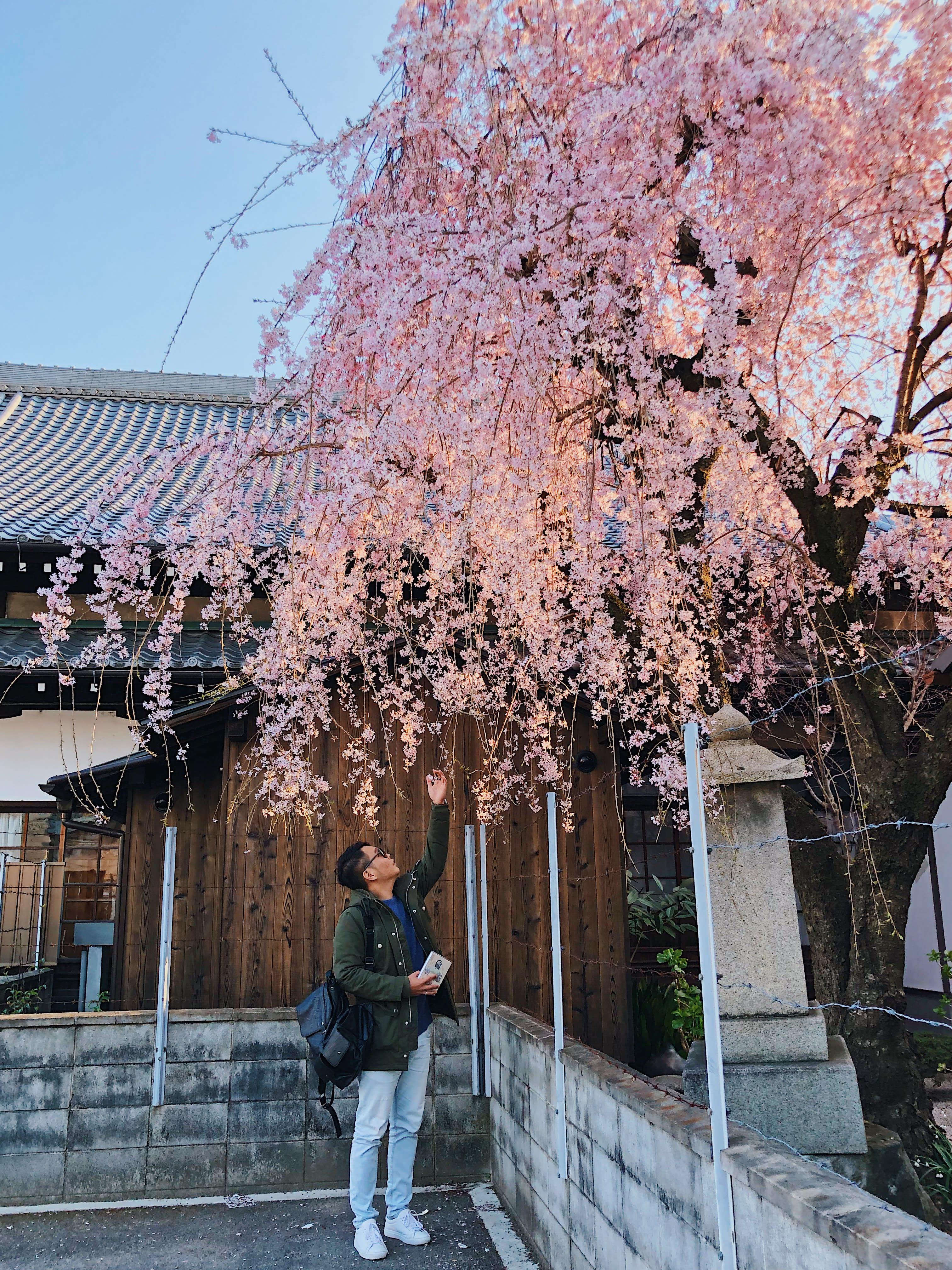 Lịch trình khám phá hết Kyoto, Osaka và Nara chỉ với 13tr! 8