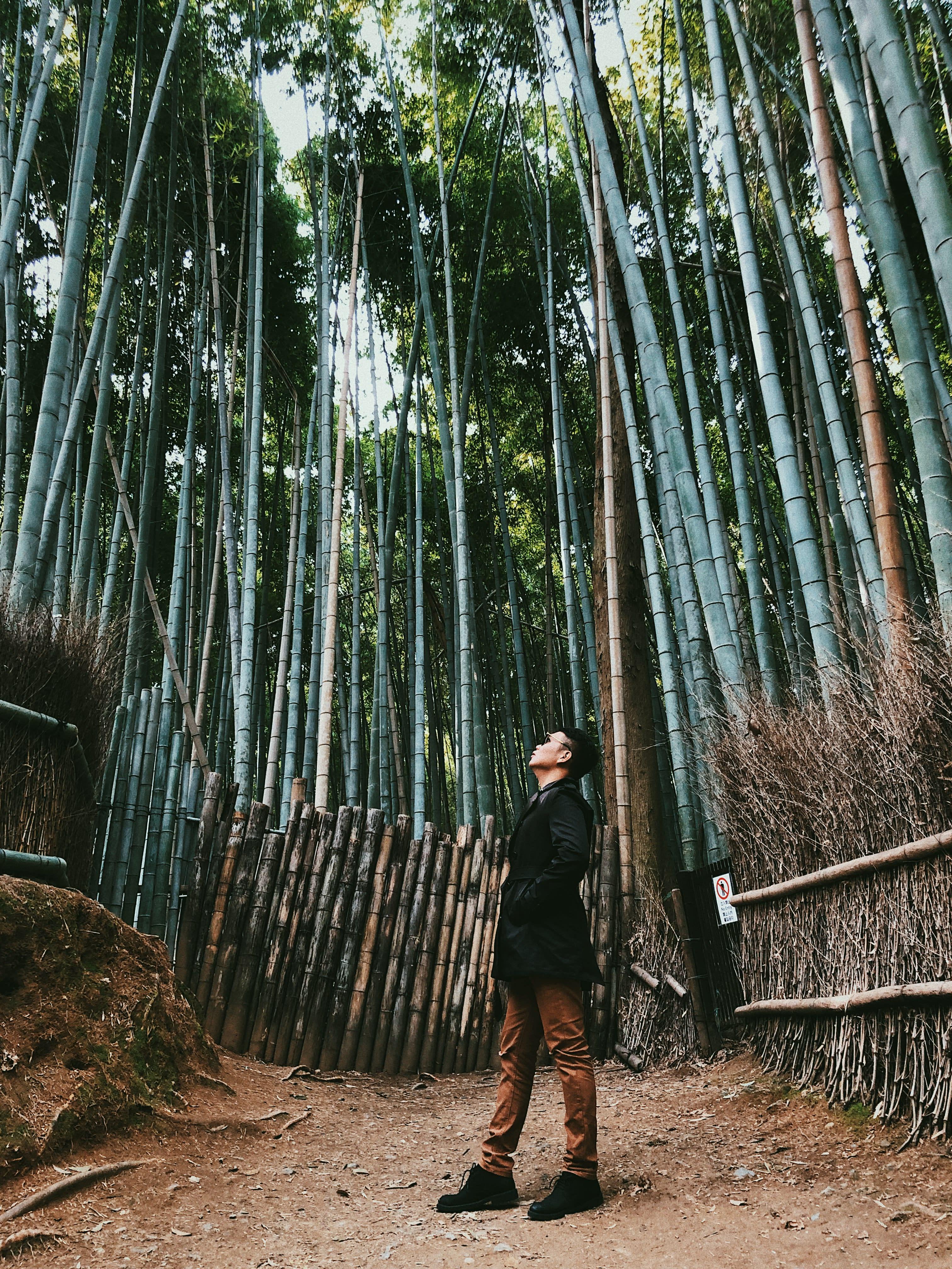 Lịch trình khám phá hết Kyoto, Osaka và Nara chỉ với 13tr! 7