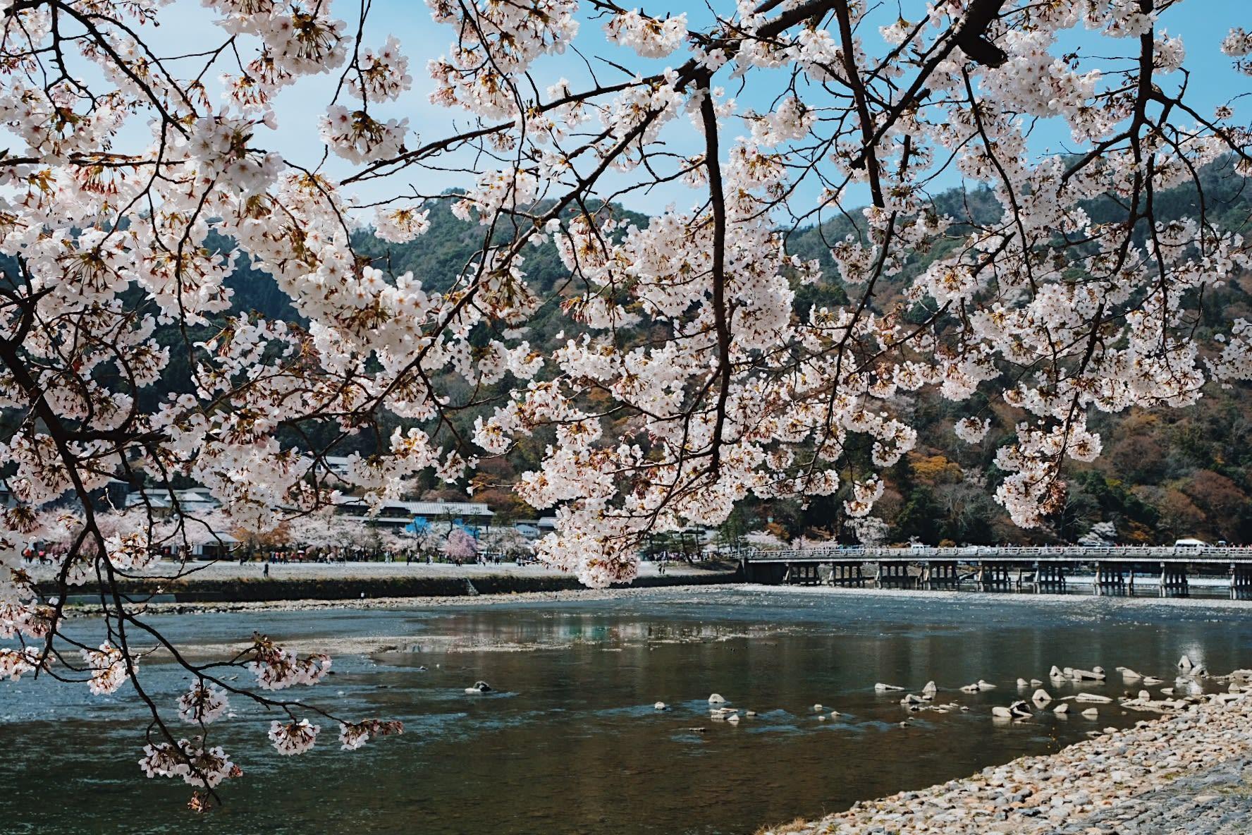 Lịch trình khám phá hết Kyoto, Osaka và Nara chỉ với 13tr! 14