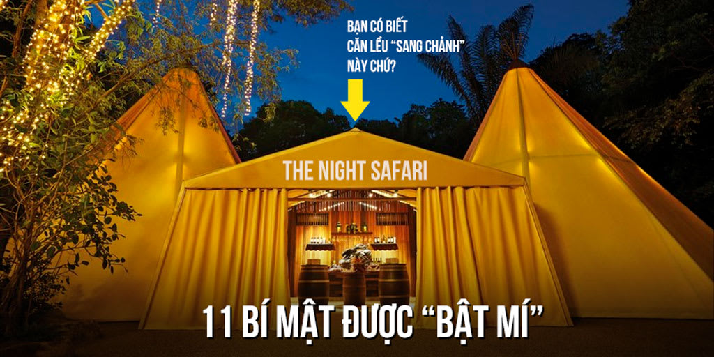 Cover Safari Night