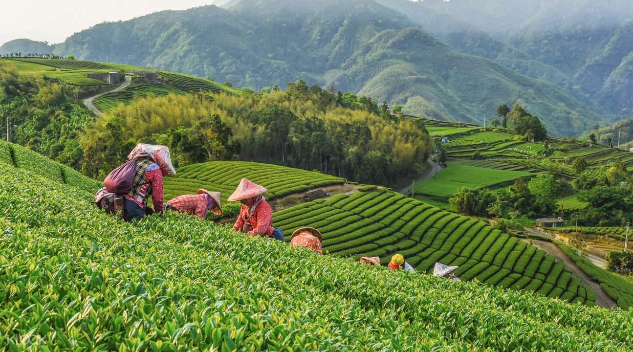 Top 10 Món Ăn Nhẹ Tột Đỉnh Tại Đài Loan Bạn Cần Phải Mang Về Nhà 9