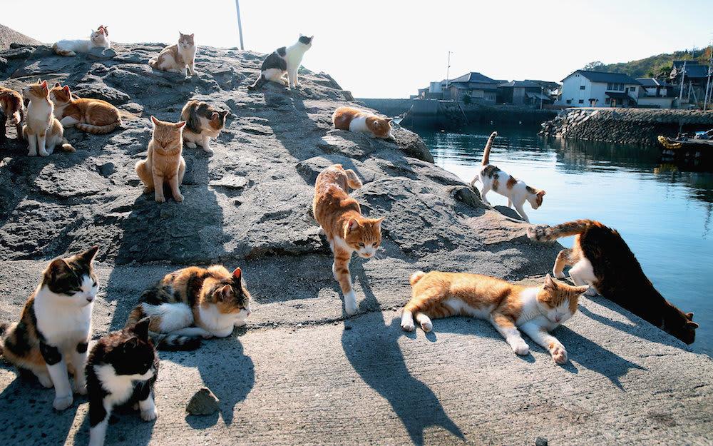 What Cat Island