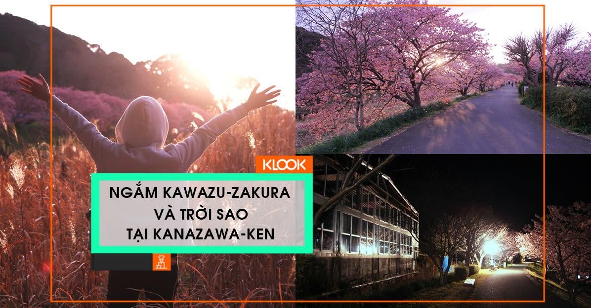 Ngắm Kawazu-zakura và trời sao tại Miurakaigan, Kanazawa-ken 1