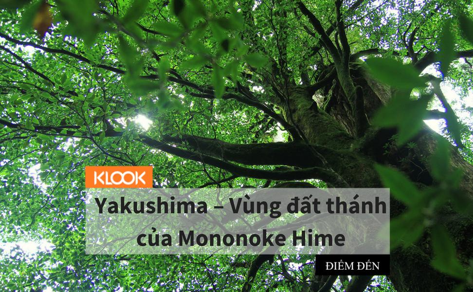 Yakushima – Vùng đất thánh của Mononoke Hime 1