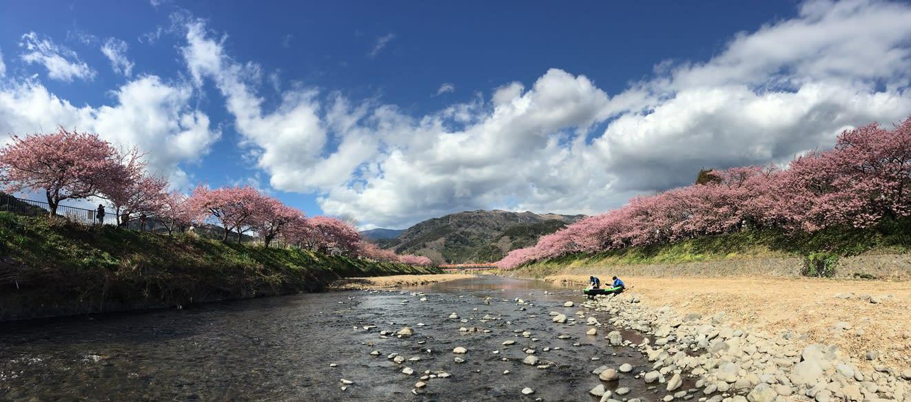 Ngắm Kawazu-zakura và trời sao tại Miurakaigan, Kanazawa-ken 2