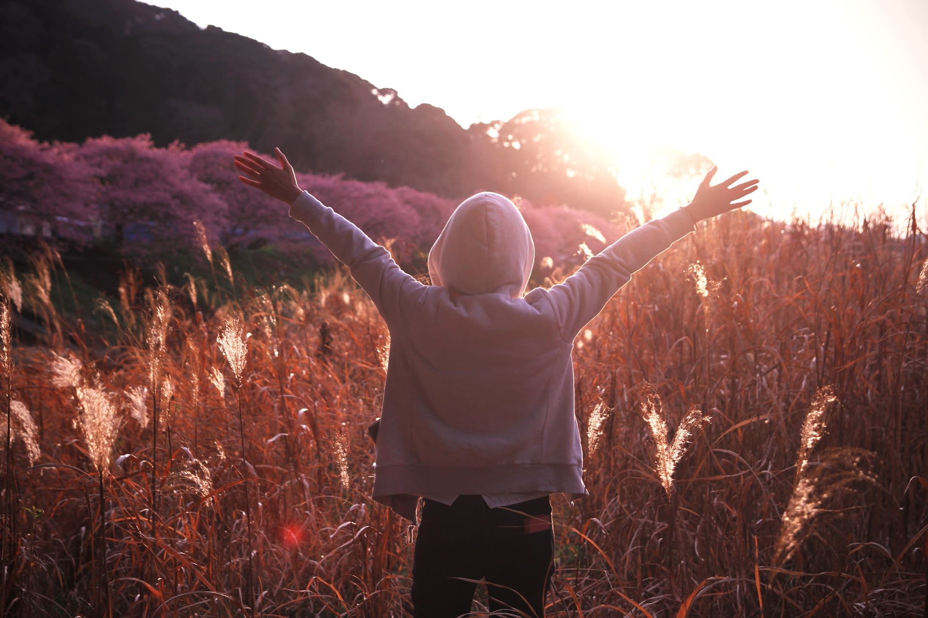 Ngắm Kawazu-zakura và trời sao tại Miurakaigan, Kanazawa-ken 6